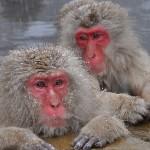 猿のイメージ